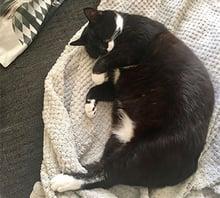 Willow's comfy cat